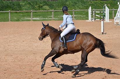 Tapis de selle pour l'obstacle et le centre équestre, chabraque mixte et dressage pour cheval et poney en equitation.