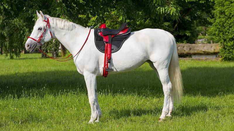 Selle d'endurance equitation NORTON