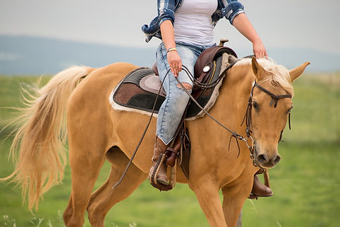 horse-3450740_1920.jpg