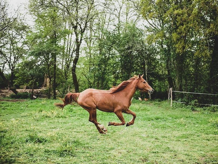boutique en ligne equipements equitation cheval france