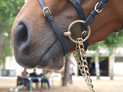 Mors d'equitation pour bridon ou bride cheval et poney ainsi que rene.