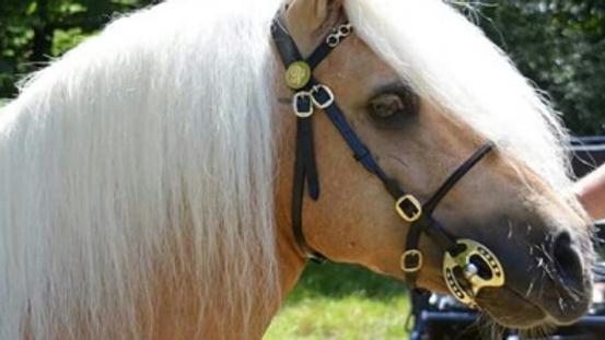 Bridon de présentation poney