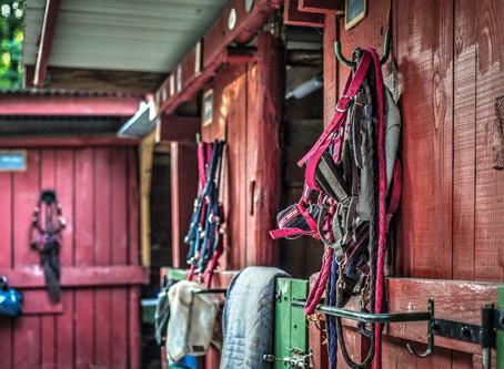Choisir son Licol et sa Longe d'équitation
