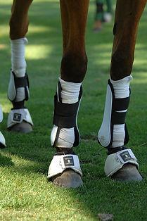 Guetre, protége-boulet, bande, stable boots, cloche cheval et poney pour équitation