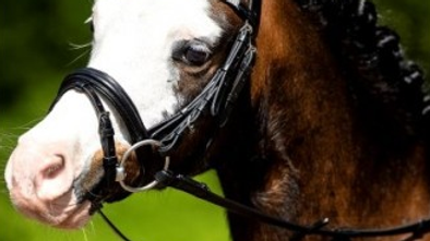 Bridon chevaux et poney petite taille frontal strass