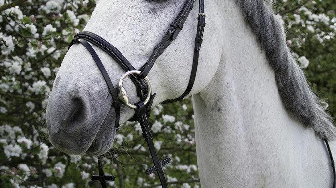 "Bridon cheval NORTON CLUB ""Design"""