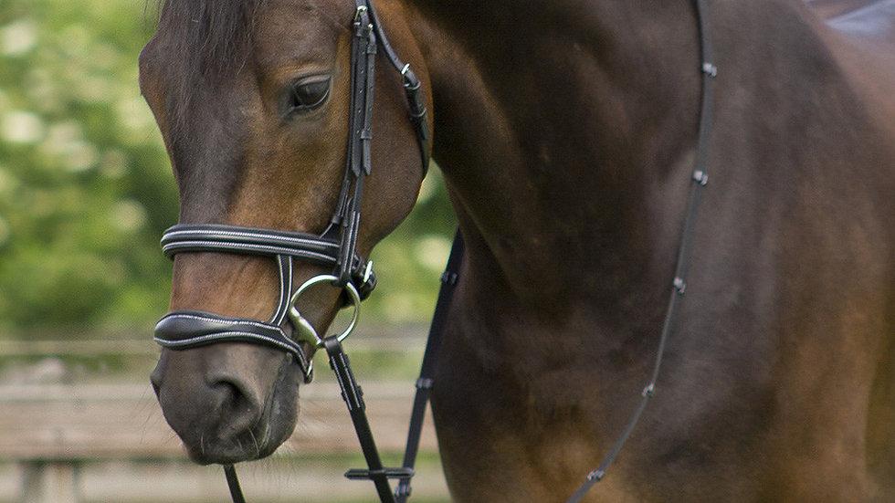 Bridon Donn d'équitation
