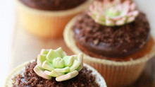 Succulent Cupcake'ler