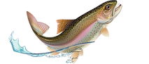 trout-clipart-with-no-background-4-remov