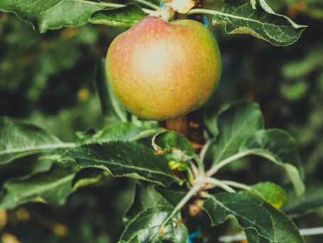 Nature is Elegant: How to grow an apple tree from a seed