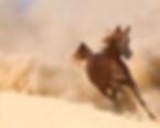 saguaro classic, desert classic show