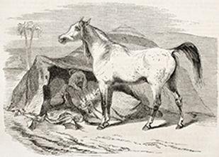 Arabian Horse Show, Saguro Classic, Desert Classic