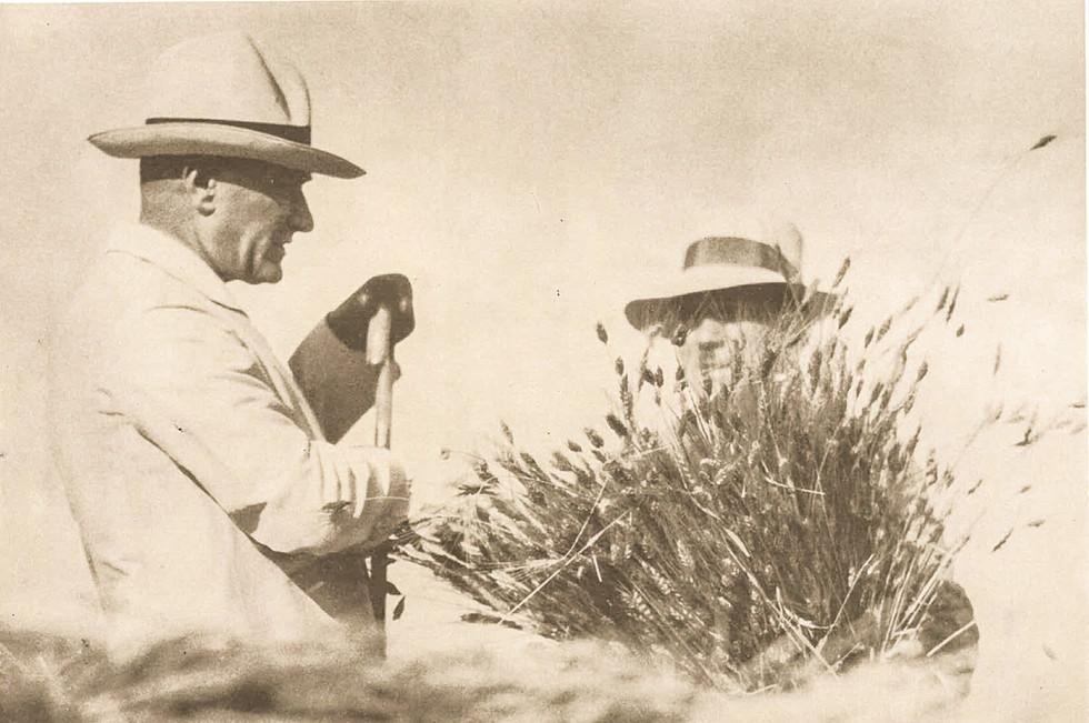 çiftlikte_hasat_yaparken_foto_cemal_14.7.1929.jpg
