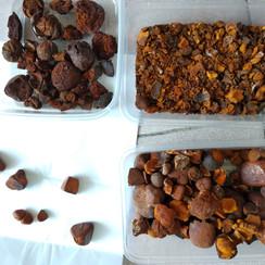 ox gallstones (52).jpg