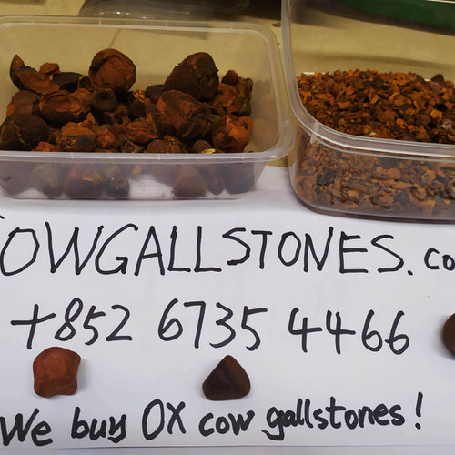 cowgallstones.com.jpg
