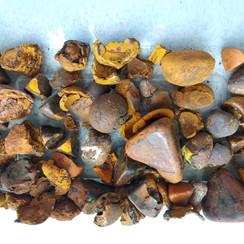 ox gallstones (1).jpg