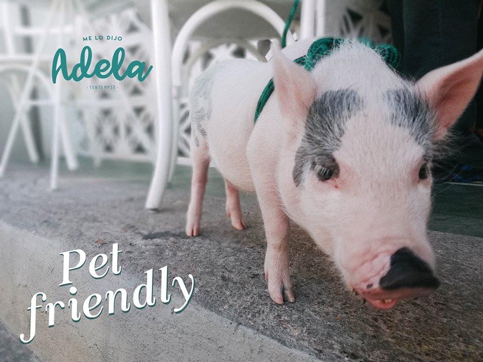 Me lo dijo Adela, mascotas en Aguascalientes