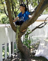 Climbing a tree is one of the simplest f