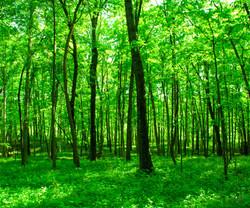 Woodlands6