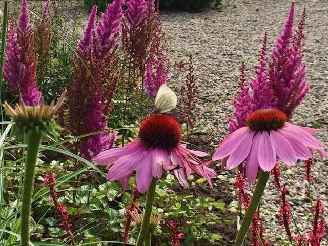 echinacea - 1-min.jpeg