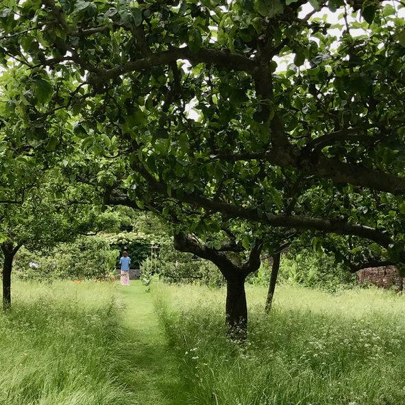 romantischer gemähter Weg Obstwiese, Garendesign, Gartenplanung, Gartenarchitektur,