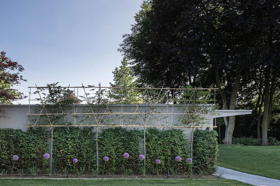 Spalierbäume, Sichtschutz, Gartenplanung, Gartendesign, Hecke, Allium