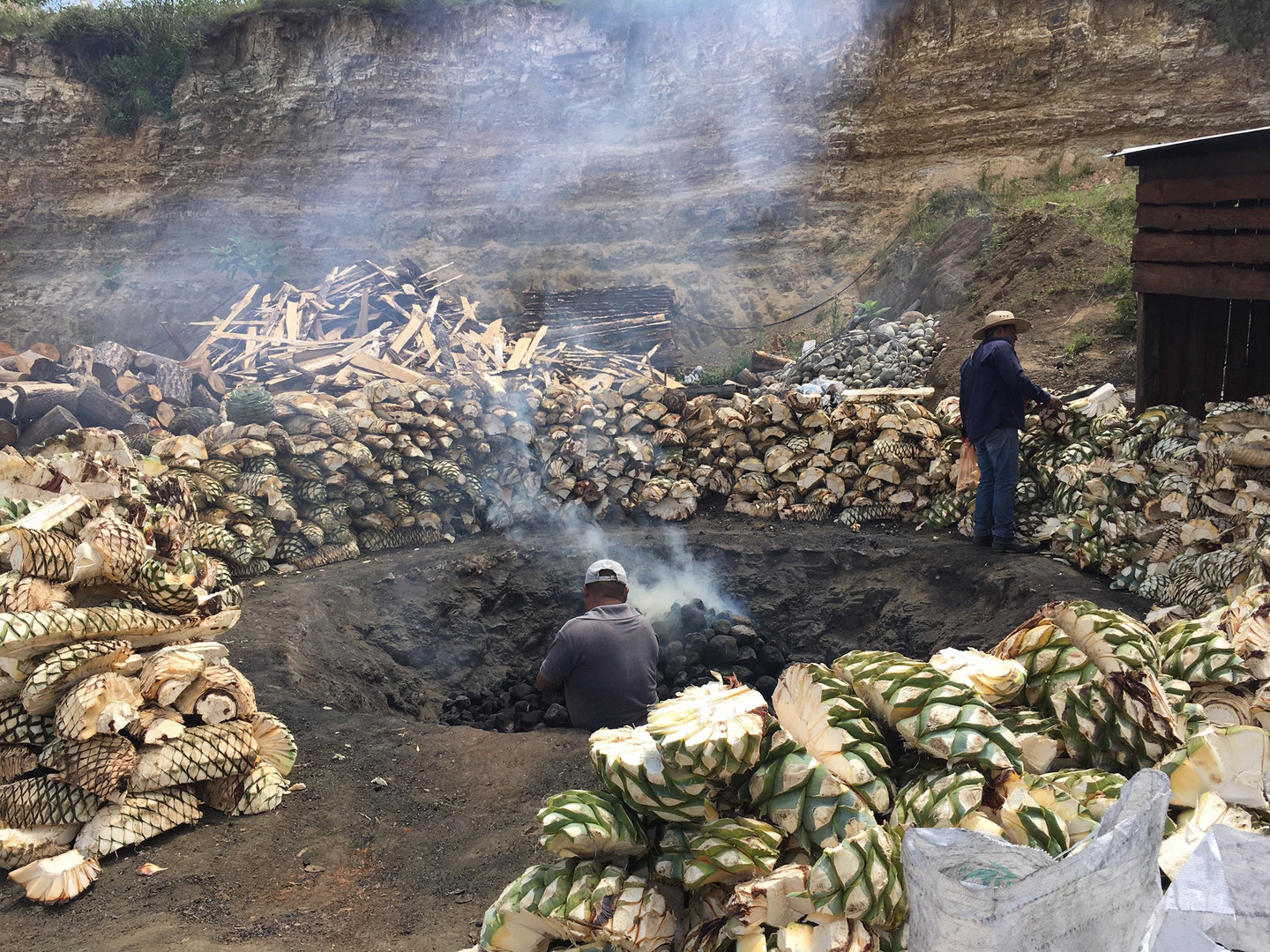 Agave around the earth oven before cooki