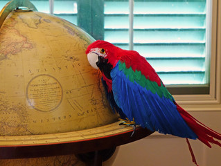 Where in the World is Polly?