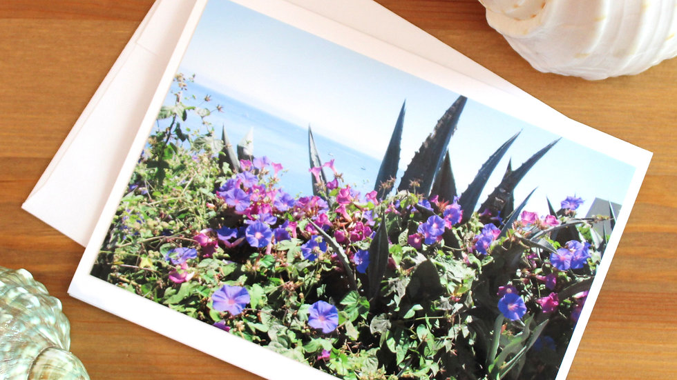 Morning Glories Capitola photo card -9545