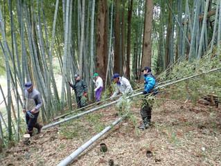 竹を取りに行きました!