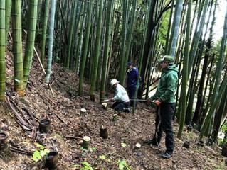 竹取りが行われました。