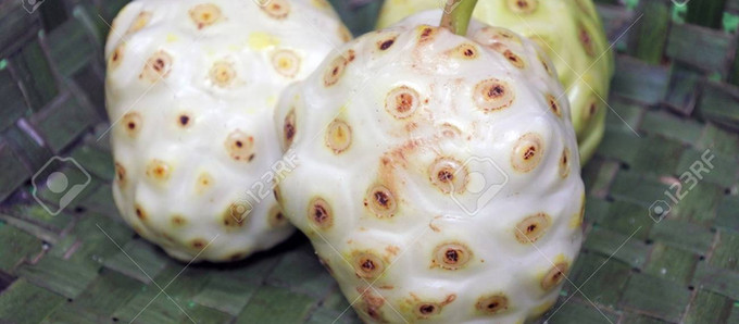 Noni, the Magical Fruit of the San Blas Islands