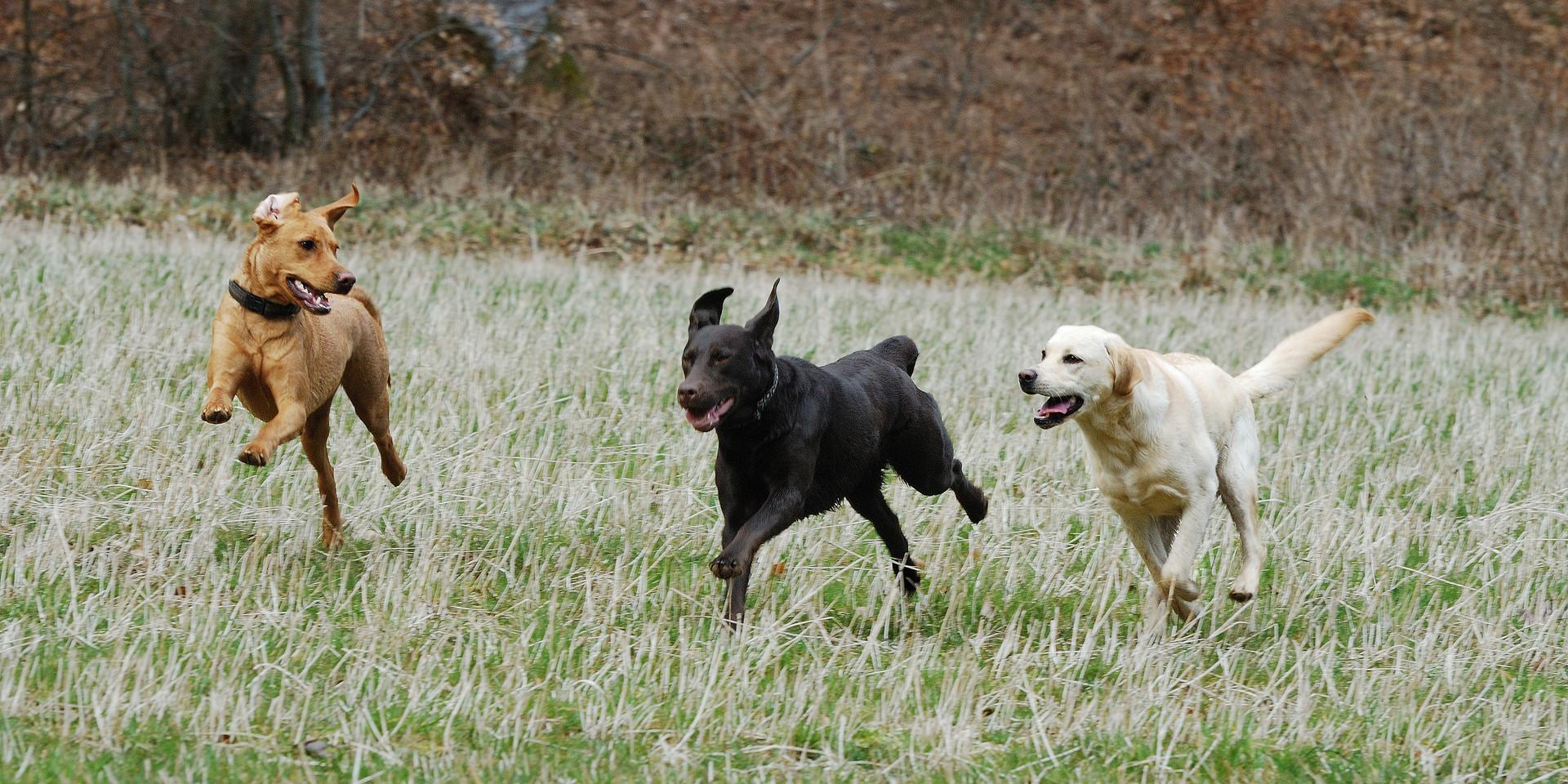 Peppy, Scarlett, Pal