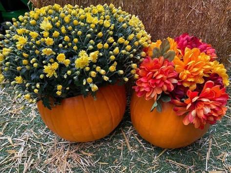 Fall Decor: Pumpkin Flower Pots
