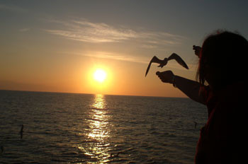 sunset-ibiza.jpg