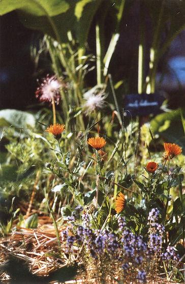 garden066.jpg