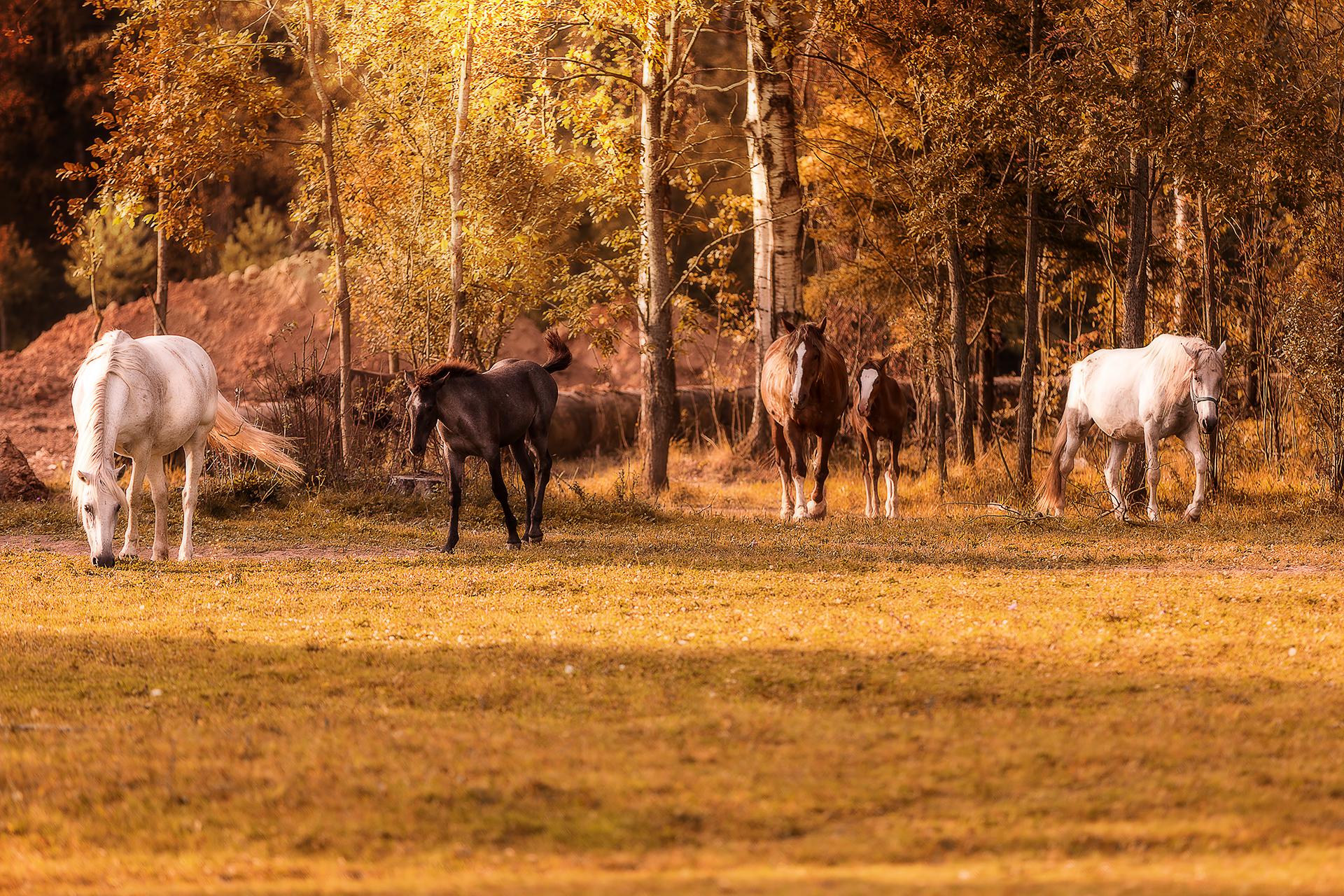 Московская область. Табун лошадей.