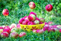 Яблочное лето
