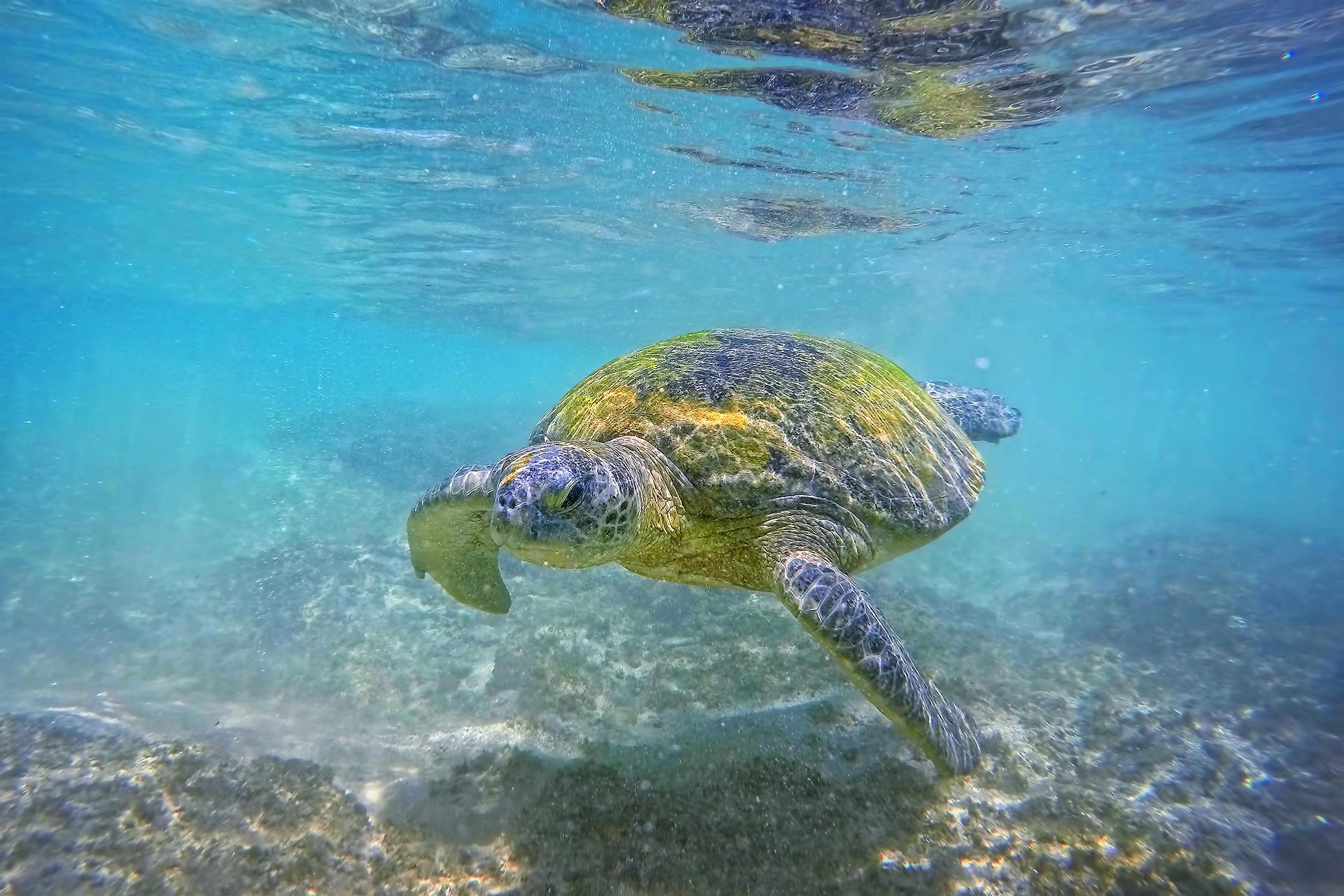 Морская чрепаха.