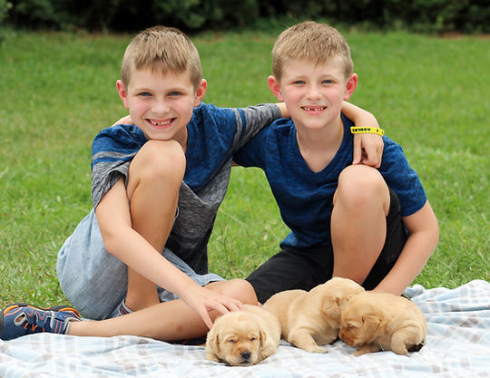 Boys with Fox Red Labrador Retriever Puppies
