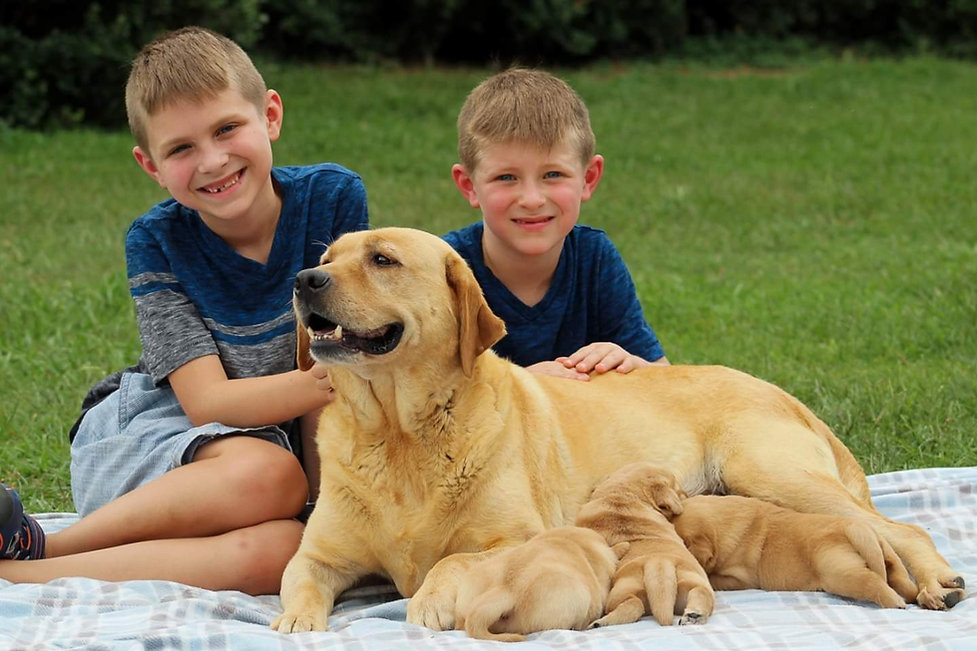 Boys with yellow Lab and Puppies