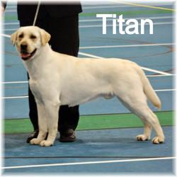 Titan at Dog Show 2015_edited