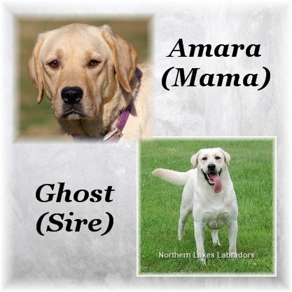 Reserve 4th Pick Boy (Amara x Ghost)