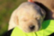 Harlee's Pups with boys 1.7.20 (5)-2.jpg