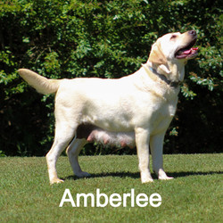 Amberlee 5.14_edited
