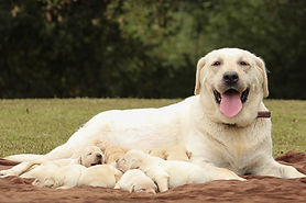 Chloe's Pups 10.9.19 (2).jpg