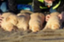 Harlee's Pups with boys 1.7.20 (2)-2.jpg