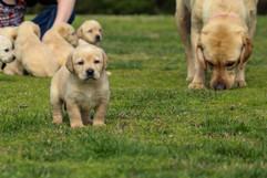 Keegan and Pups 2.23.20 (3).jpg