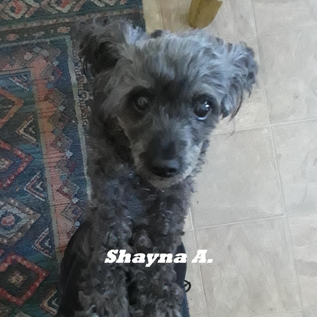 Shayna A..jpg
