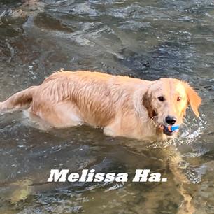 Melissa Ha..jpeg